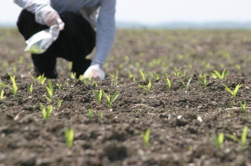 APIA anunță că nu este obligată că achite sumele pe pachete de agromediu