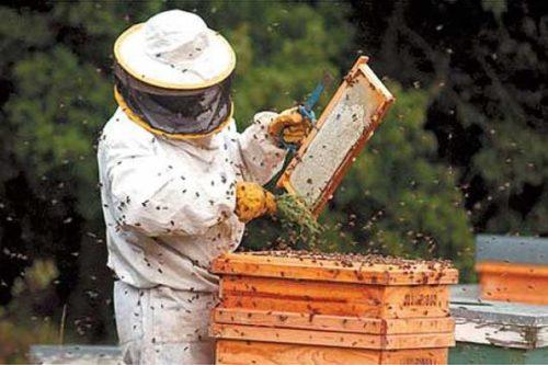 Cati bani primesc apicultorii?  Comisia Europeană a aprobat PNA 2017-2019