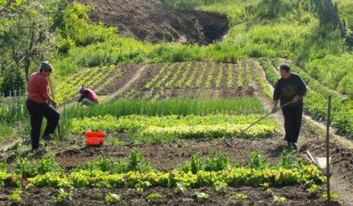 Au fost lansate doua noi măsuri de finanțare din PNDR 2014-2020: submăsurile 9.1 'Înființarea grupurilor de producători în sectorul agricol' și 9.1a 'Înființarea grupurilor de producători în sectorul pomicol
