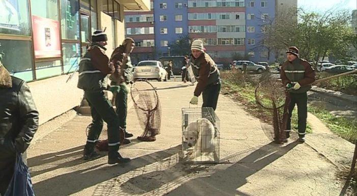 Primaria Râmnicu Vâlcea angajează hingheri și muncitori constructori
