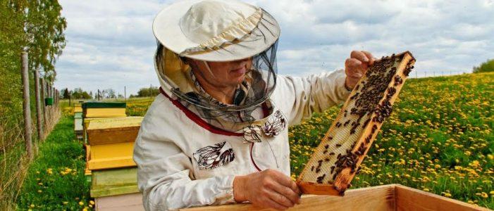 Programul Naţional Apicol: APIA anunta ce sume vor incasa apicultorii in 2016