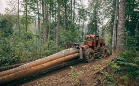 Proprietarii de păduri vor beneficia de servicii de pază gratuite a terenurilor forestiere