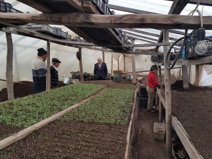 Au început plățile pentru ciclul II al programului de sprijin pentru tomate