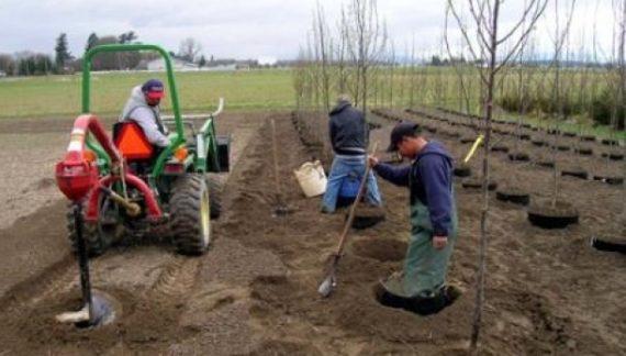 Sprijinul pentru prima împădurire şi crearea de suprafeţe împădurite  poate fi solicitat până la 31 martie 2017