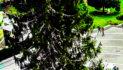 Ramnicu Valcea: Bradul de Crăciun a fost montat în Zona Centrală