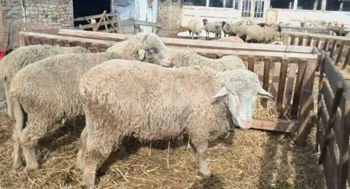Ministerul Agriculturii a identificat zonele în care vor fi realizate centrele de colectare a lânii