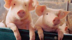 Exportul de animale creaza tensiuni intre România și Republica Moldova