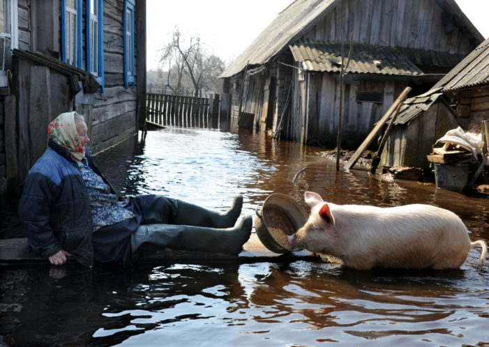 Măsuri pentru protejarea animalelor și a păsărilor în caz de inundații
