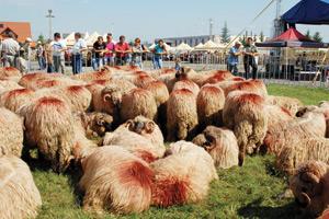APIA incepe plata în avans pentru fermierii care au solicitat sprijin cuplat în sectorul zootehnic pentru speciile ovine și caprine