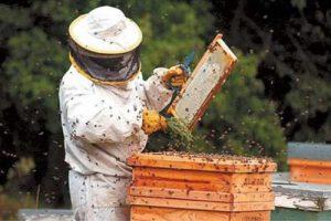 PNA 2018: Crescatorii de albine pot depune cereri de finantare până la 1 august