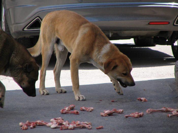 Gorj: Clinica Veterinară Mobilă demareaza un program de sterilizare și castrare gratuită a câinilor și pisicilor