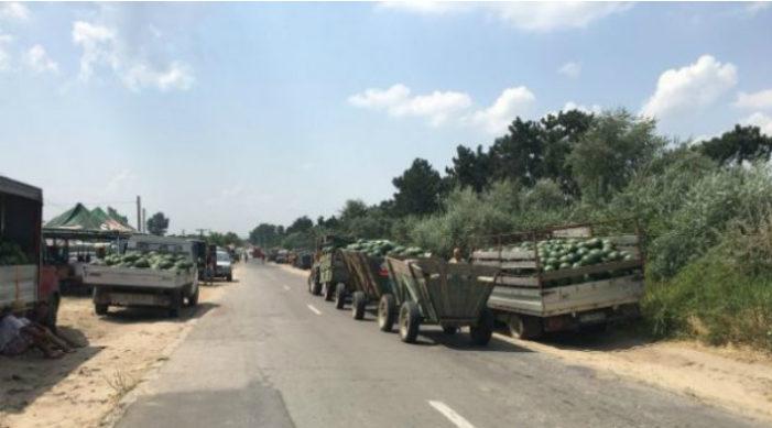 Primii pepeni de Dăbuleni au apărut pe piaţă
