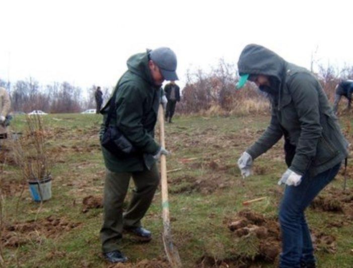 Olt: Primăria municipiului Slatina anunță demararea celei mai ample campanii de împădurire pe raza orașului