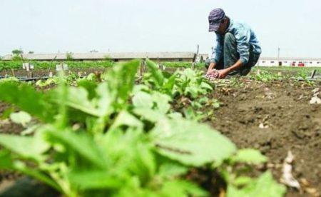 Peste 5 milioane lei alocate pentru sprijinirea temporară a producătorilor de legume și fructe