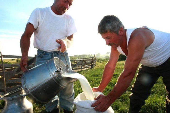 APIA anunta ca s-a încheiat perioada de depunere a cererilor pentru acordarea ajutorului excepţional destinat producătorilor de lapte