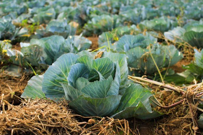Ferma de legume BIO | Sfaturi pentru o afacere profitabila