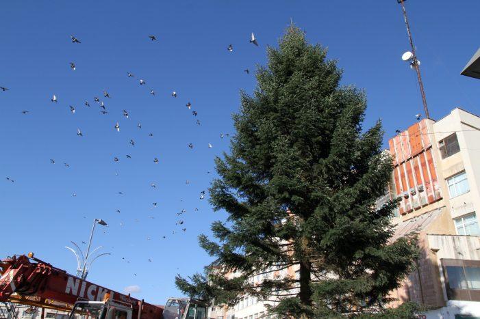 Ramnicu Valcea: Bradul de Crăciun a fost montat în Scuarul Mircea cel Bătrân