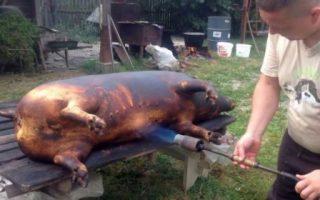 Panica pestei porcine se propaga in Dolj! In mai multe localitati a inceput sacrificarea porcilor