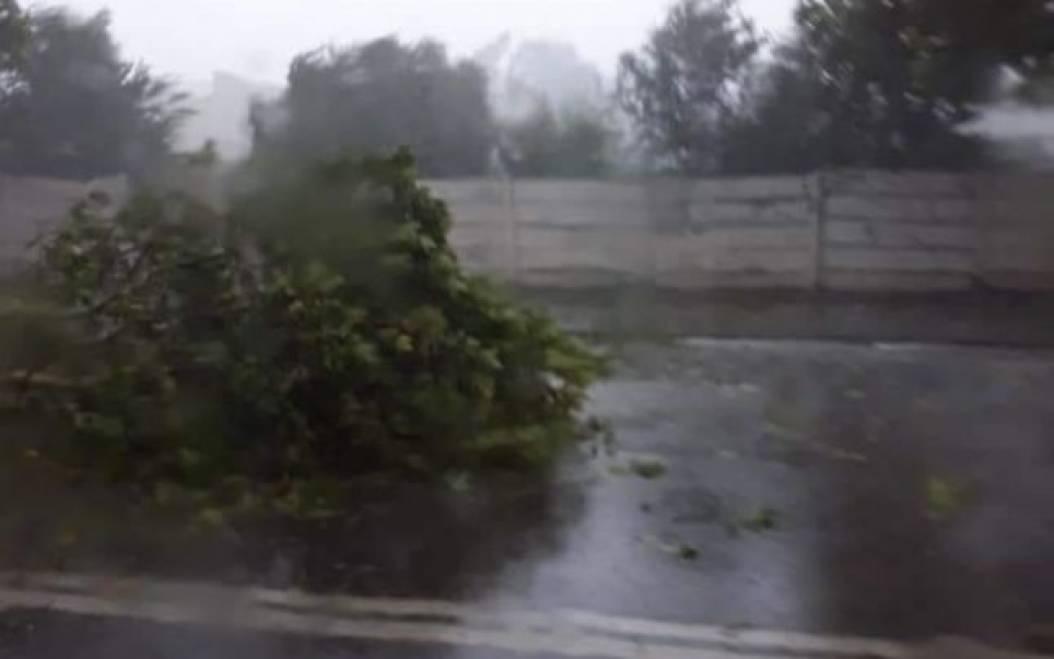 furtuna dolj, copaci cazuti